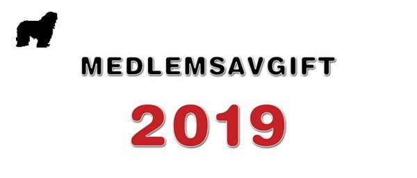 Bergamasco Medlemsavgift 2019